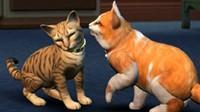 "GC 2017:《模拟人生4》""猫狗""DLC公布 将登陆PS4和Xbox One"