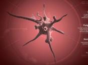 《瘟疫公司:进化》评测:过一把灭绝人类的瘾